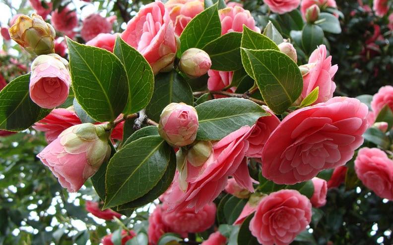 Самые редкие в мире цветы