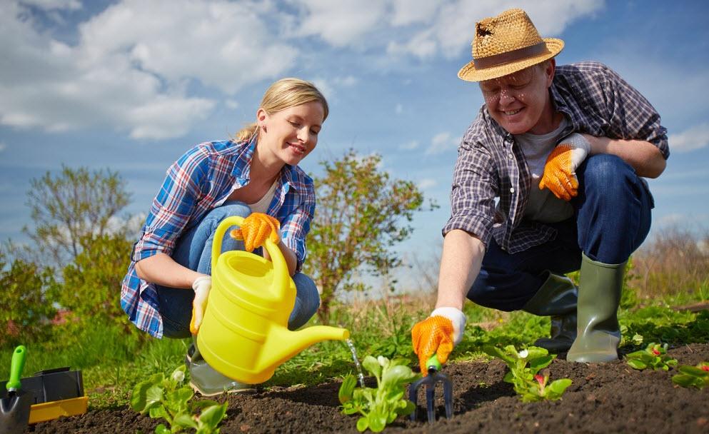 Основные работы в летнее время в саду, также огороде