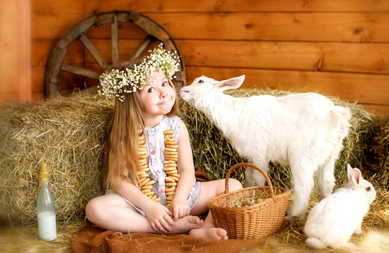 Как правильно кормить новорожденных козлят