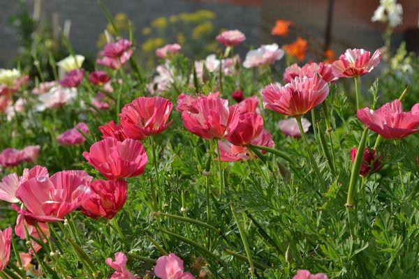 Особенности выращивания популярных комнатных растений