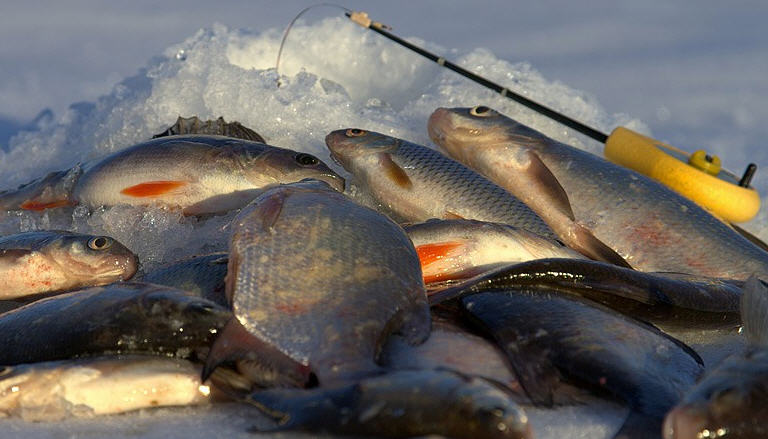 ловля плотвы зимой