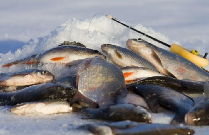 Зимняя плотва тонкости ловли