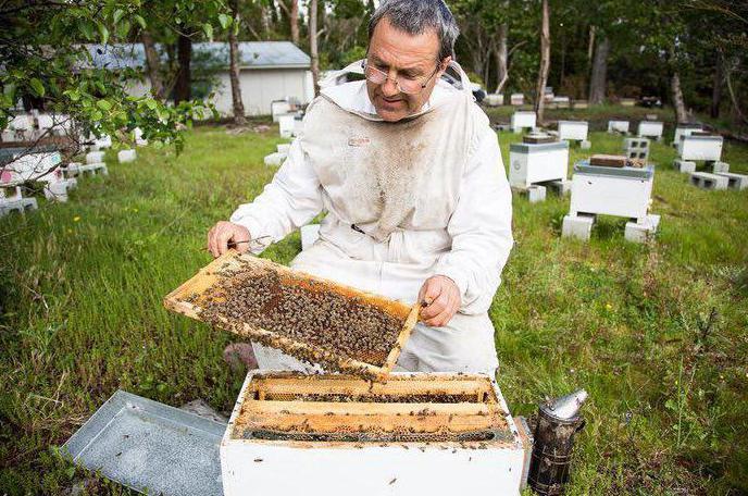 Как подкормить пчел зимой сахарным сиропом