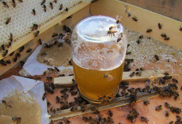 пчелы и сахарный сироп