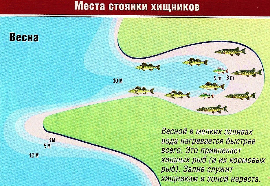 места стоянки хищной рыбы