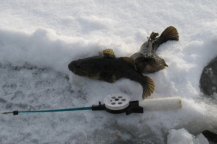 Как и где ловить ротана зимой