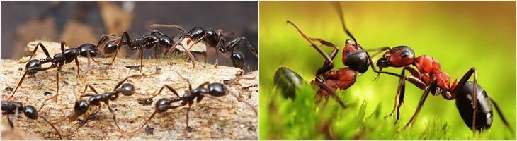 избавляемся от муравьев