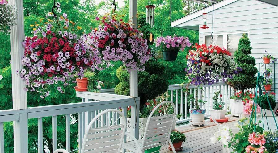 Как разместить растения в доме и на террасе