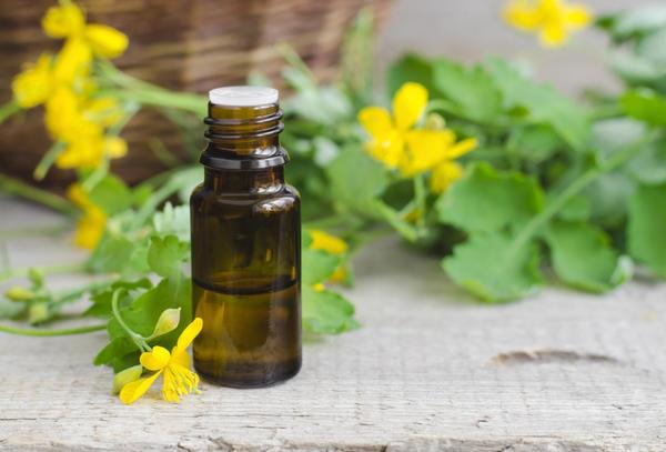 Чистотел — лекарственное растение