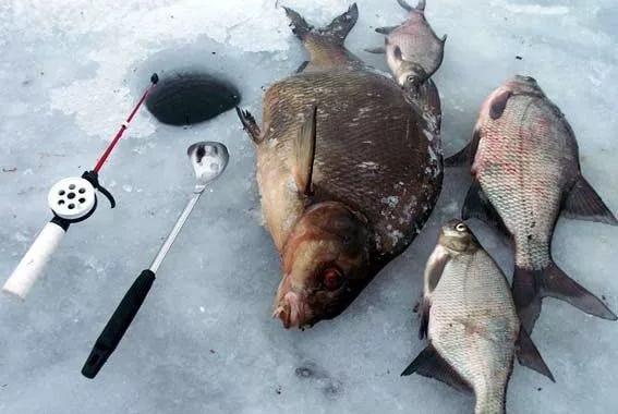 примеру, насадки для хищной рыбы на реке Ейска Торговля Гипермаркеты