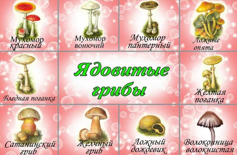 Какие грибы самые ядовитые и опасные