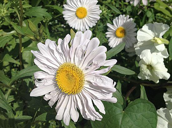 Преимущества доставки цветов