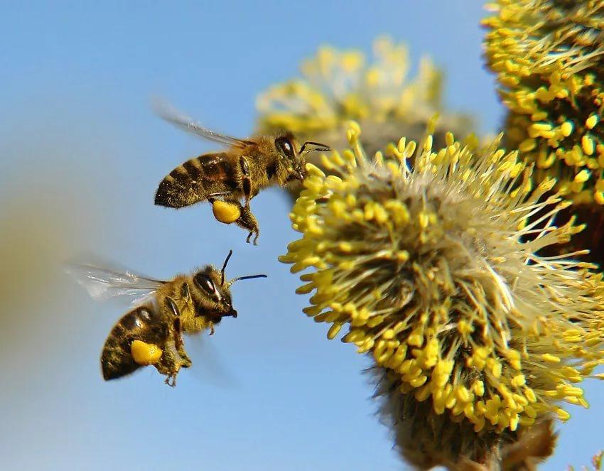 Ранневесенний мед
