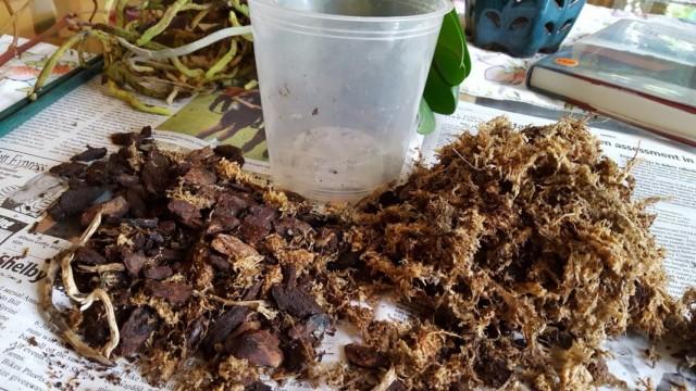 Специальный субстрат для выращивания орхидей в комнатных условиях