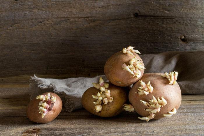 Чем вреден проросший картофель