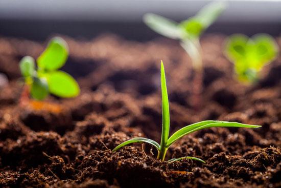 Как выбрать почву в качестве удобрения