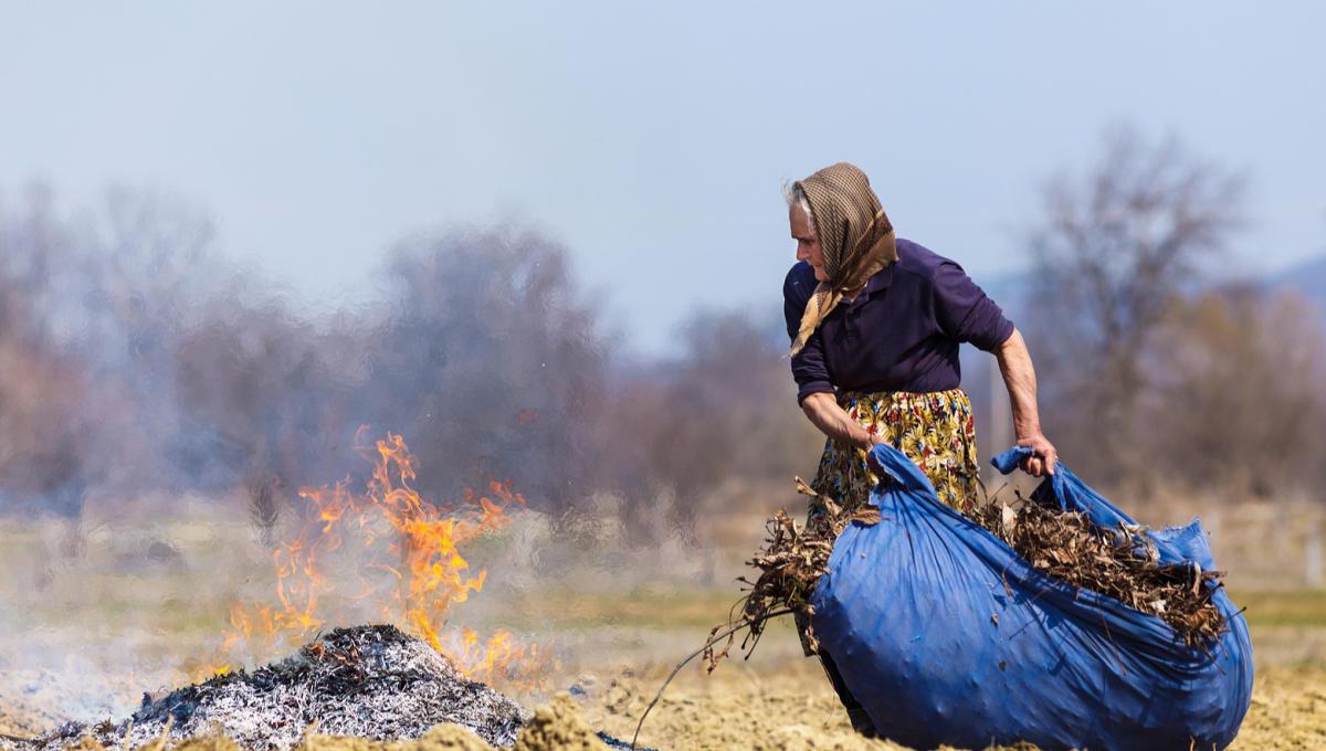 Аккуратные дачники дочиста вычищают участок от травы и листьев