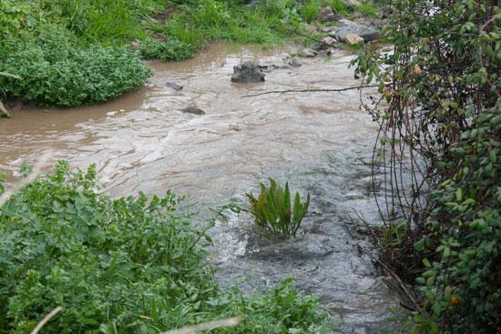 После ливней вода стекает в водоемы отовсюду