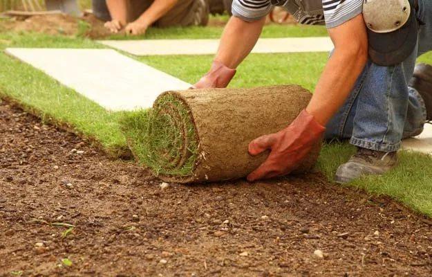 Рулонный газон - оптимальный вариант для озеленения участка
