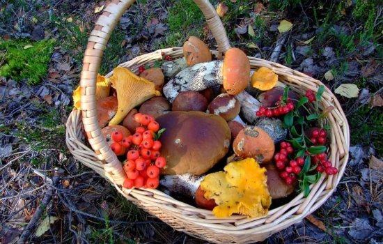 Какие грибы самые полезные