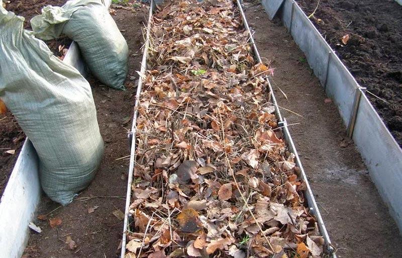 укрыть грядку листьями