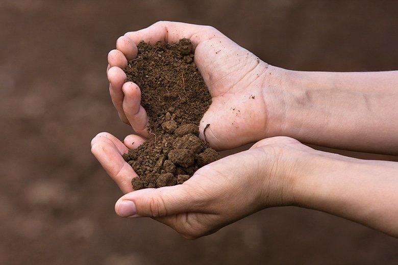 плодородная земля в руках