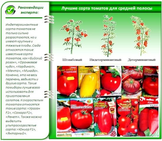 сорт томатов в открытый грунт