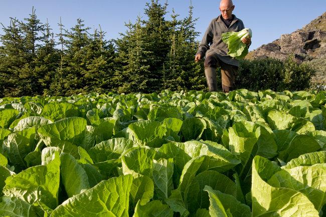 Экоземледелие - это чистые овощи и хорошая земля