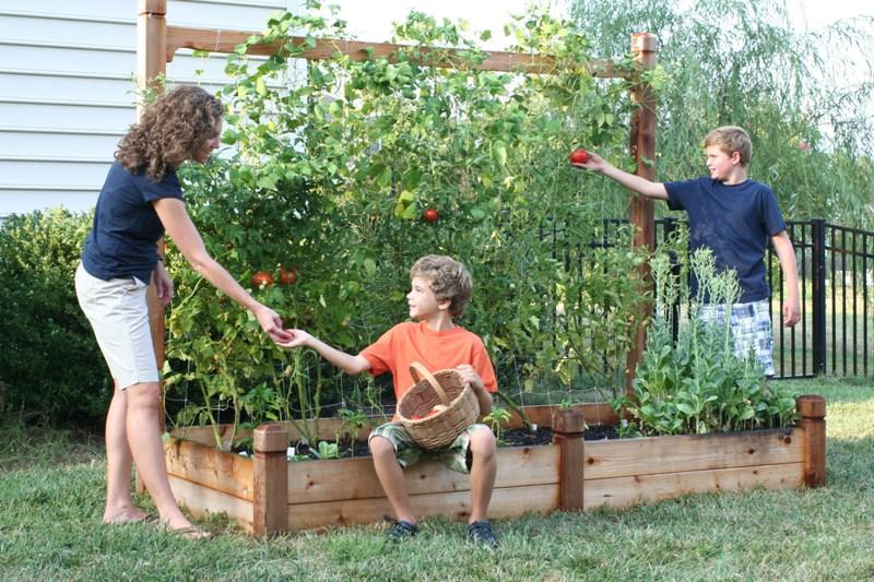 Что сажать в августе на огороде