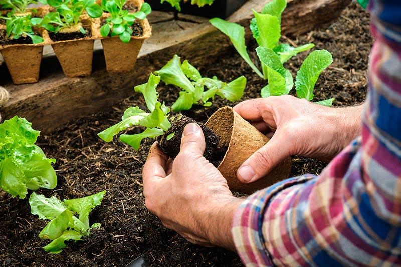 Правила для богатого урожая