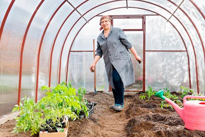 уход за рассадой помидоров