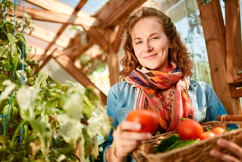 Как быстро и правильно удалить листья на помидорах