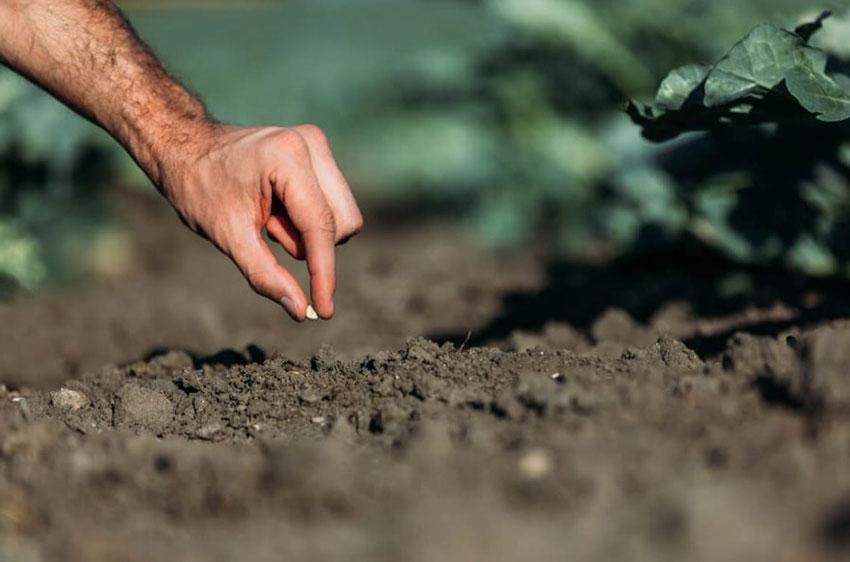 Определяем кислотность почвы самостоятельно