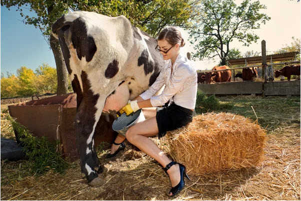 девушка доит корову