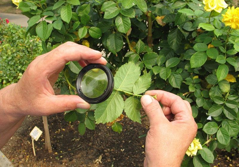 Защита растений от заболеваний и вредителей