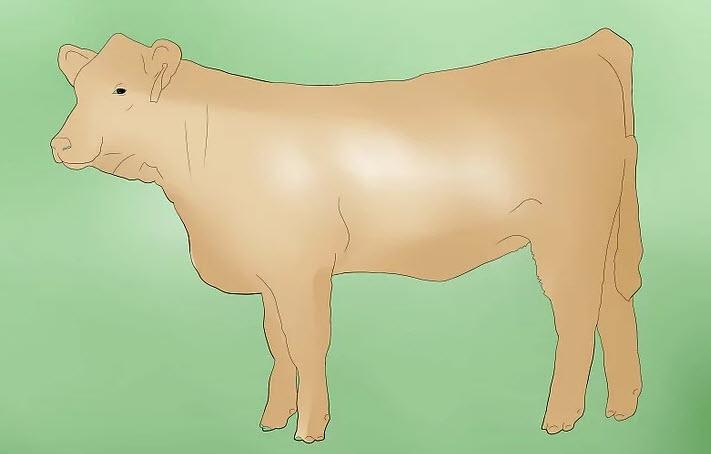 Корова не может разродиться