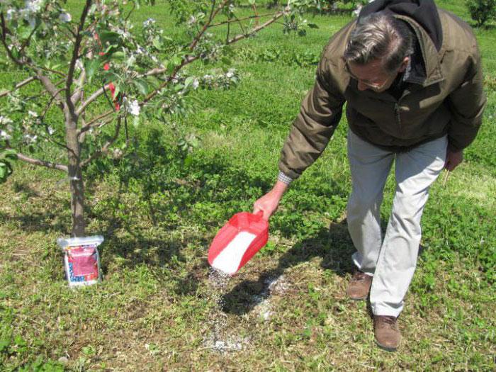 Осенний полив и подкормка садовых деревьев