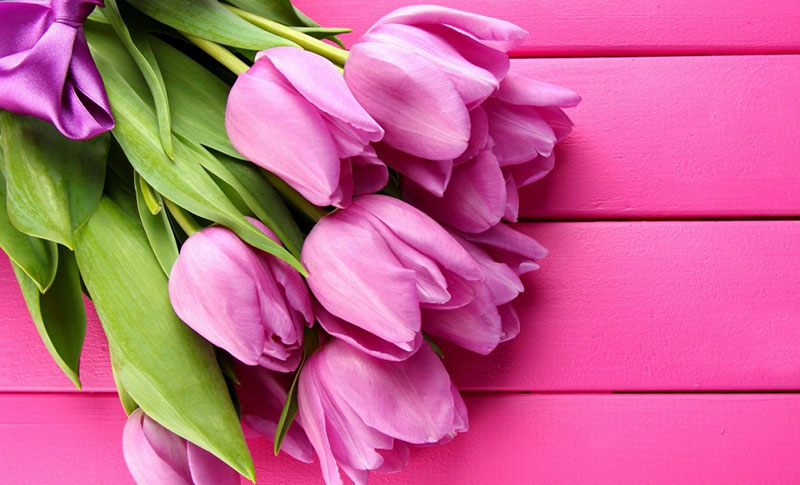 Отличные тюльпаны для весенних праздников и не только