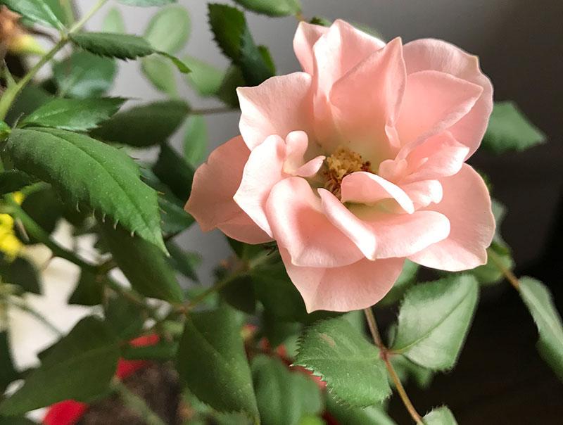Цветы, цветущие всю зиму и не требующие много времени