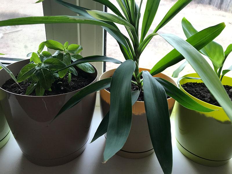 Как выбрать комнатные растения для дома