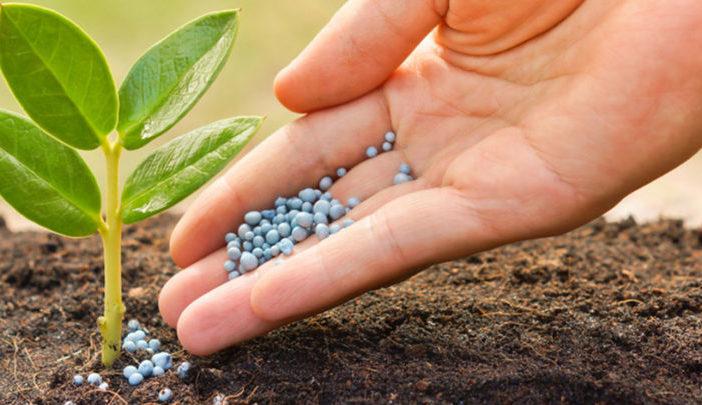 Какие средства помогут защитить растения от болезней и вредителей