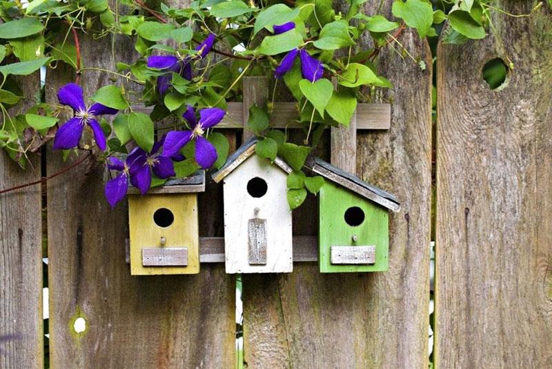 Каких птиц считают наиболее желанными гостями в огороде