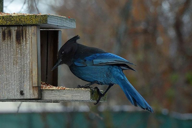 как привлечь птиц на участок