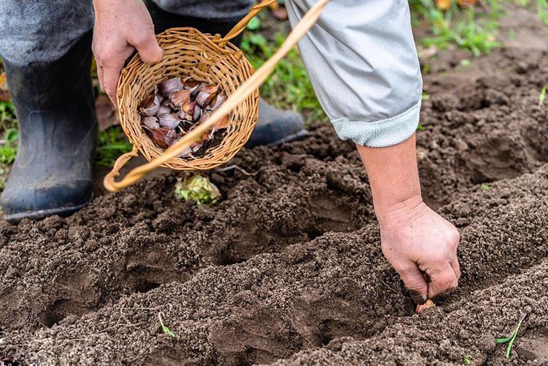 Как проводить осенний посев овощей