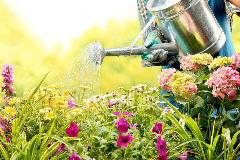 Зимний сезон для цветовода: стоит ли отдыхать
