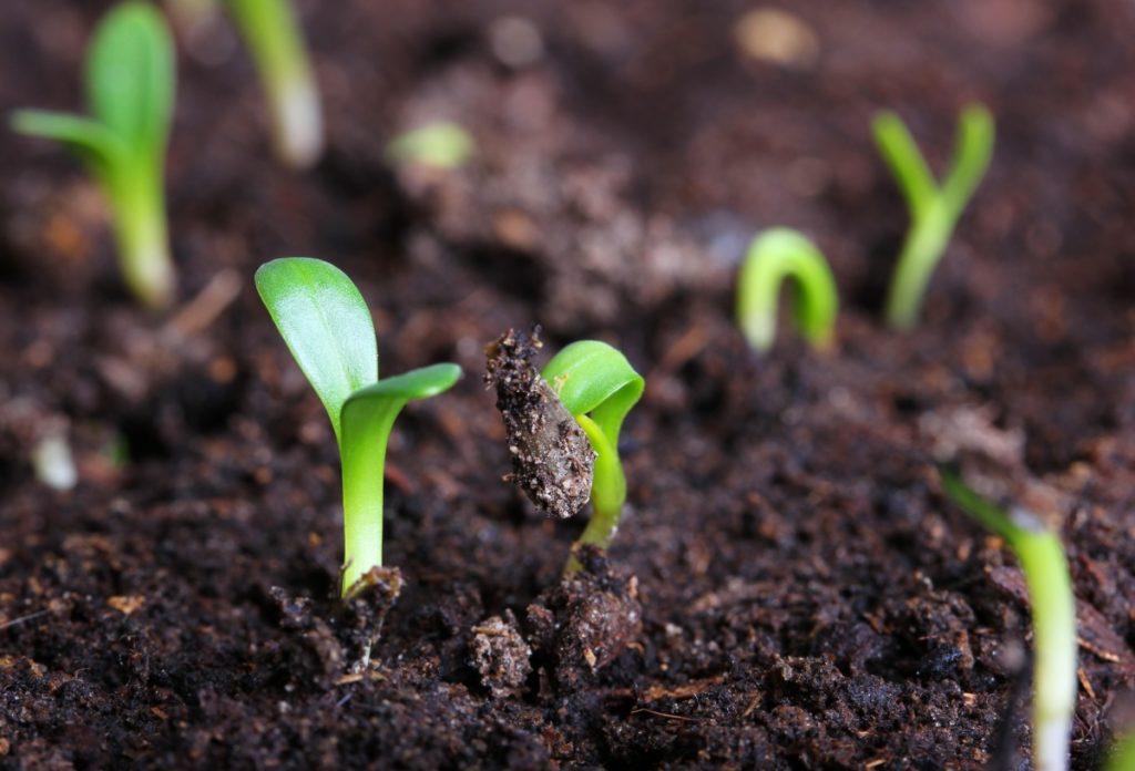 Как выбрать семена и когда сеять овощи на рассаду