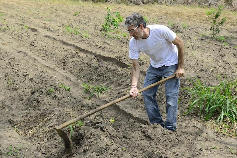 инструкция посадки чеснока весной