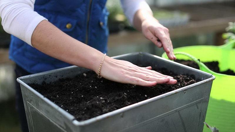 Каким должен быть идеальный рассадный грунт