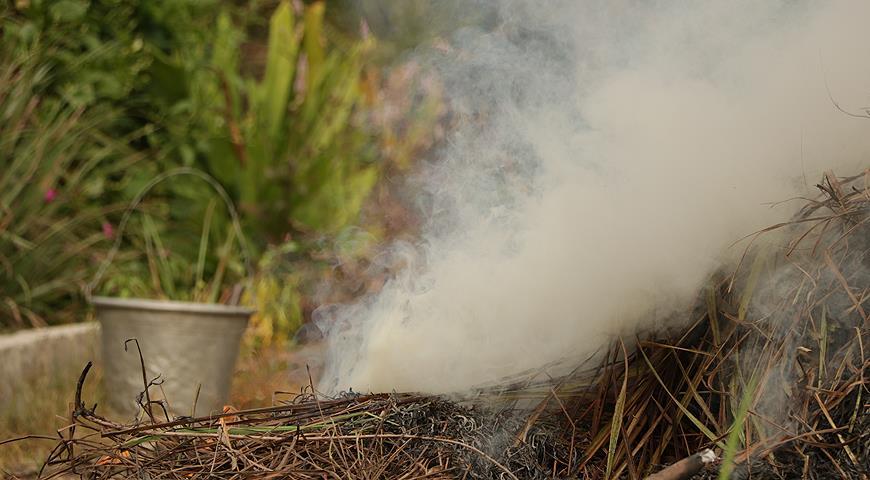 Дождевание и дымление – защита плодовых деревьев от заморозков