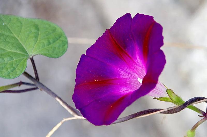 Какие цветы садим в мае